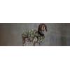 Жилет Dog J Camouflage для амстаффа, бультерьера, добермана,   шарпея, колли , кане корсо, овчарку, риджбека, хаску, сеттера, акиты, английского бульдога, боксера, далматина, лабрадора, ретривера