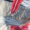 Комбинезон PeroTaksa теплый для собак породы такса