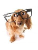 Владелец! Кто ТЫ для своей собаки???