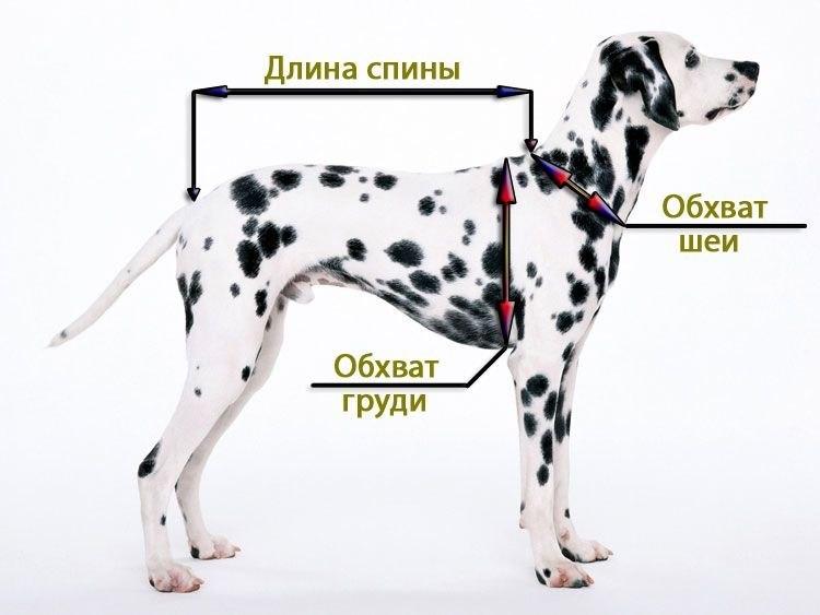 Как измерить сабаку, для покупки одежды для средних и крупных собак, комбинезоны, дождевики, жилеты, куртки, шарфы